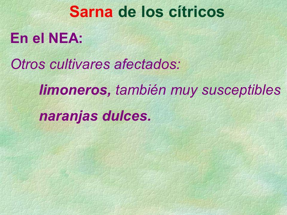 Sarna de los cítricos En el NEA: Otros cultivares afectados: limoneros, también muy susceptibles naranjas dulces.