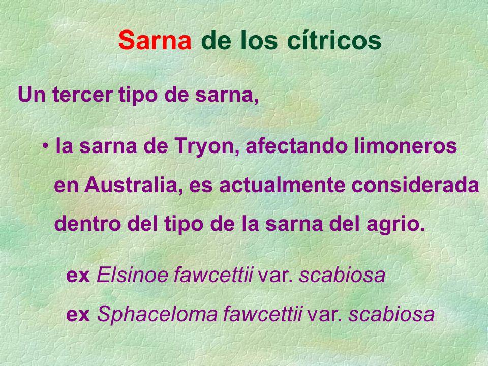 Sarna de los cítricos Un tercer tipo de sarna, la sarna de Tryon, afectando limoneros en Australia, es actualmente considerada dentro del tipo de la s