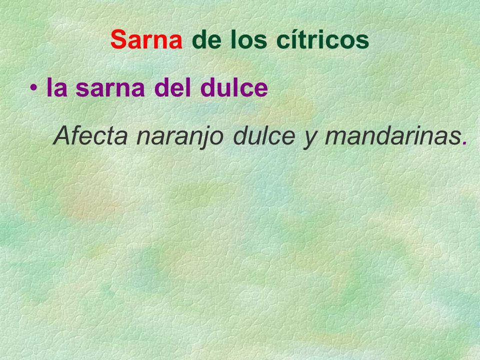 Sarna de los cítricos la sarna del dulce Afecta naranjo dulce y mandarinas.