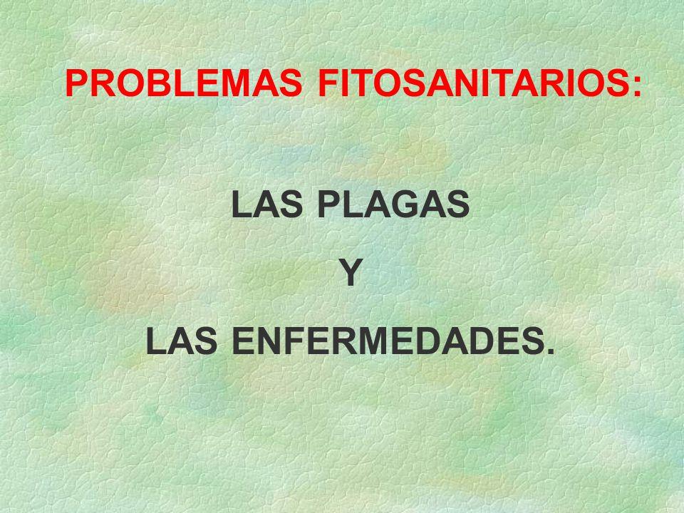 PROBLEMAS FITOSANITARIOS: LAS PLAGAS Y LAS ENFERMEDADES.