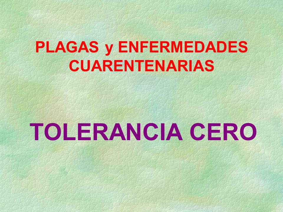 PLAGAS y ENFERMEDADES CUARENTENARIAS TOLERANCIA CERO