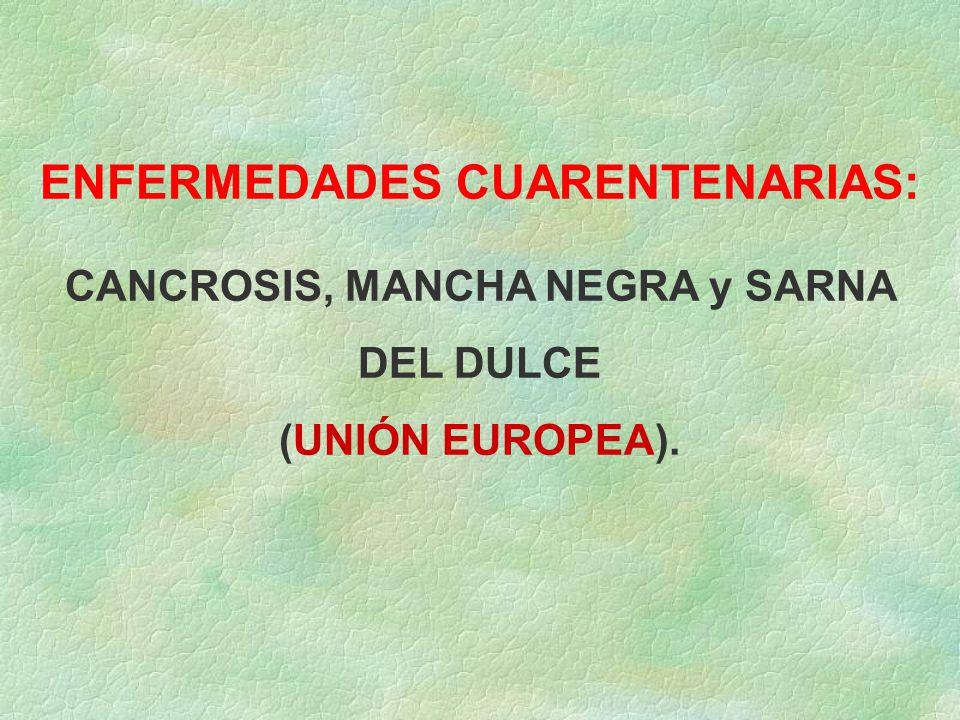 ENFERMEDADES CUARENTENARIAS: CANCROSIS, MANCHA NEGRA y SARNA DEL DULCE (UNIÓN EUROPEA).