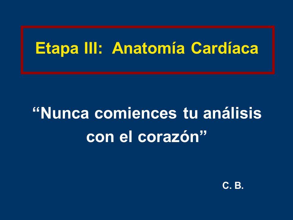 Etapa III: Anatomía Cardíaca Nunca comiences tu análisis con el corazón C. B.
