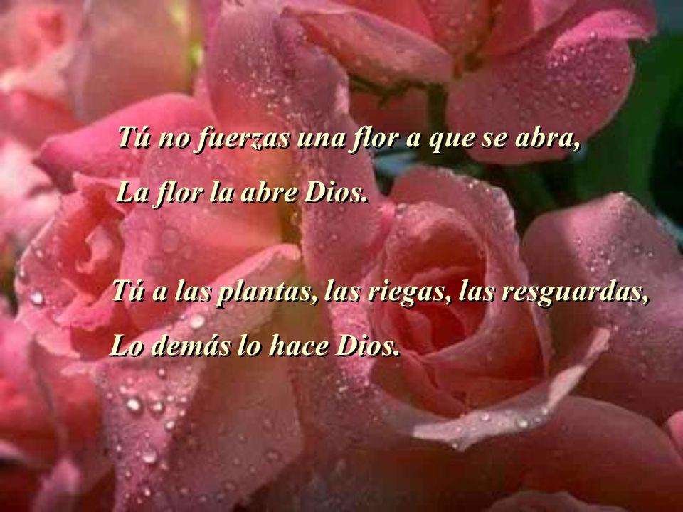 Tú no fuerzas una flor a que se abra, La flor la abre Dios. Tú no fuerzas una flor a que se abra, La flor la abre Dios. Tú a las plantas, las riegas,