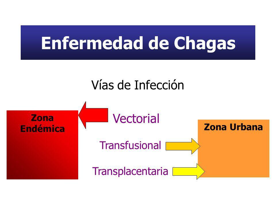 Enfermedad de Chagas Vías de Infección Vectorial Transfusional Transplacentaria Zona Urbana Zona Endémica