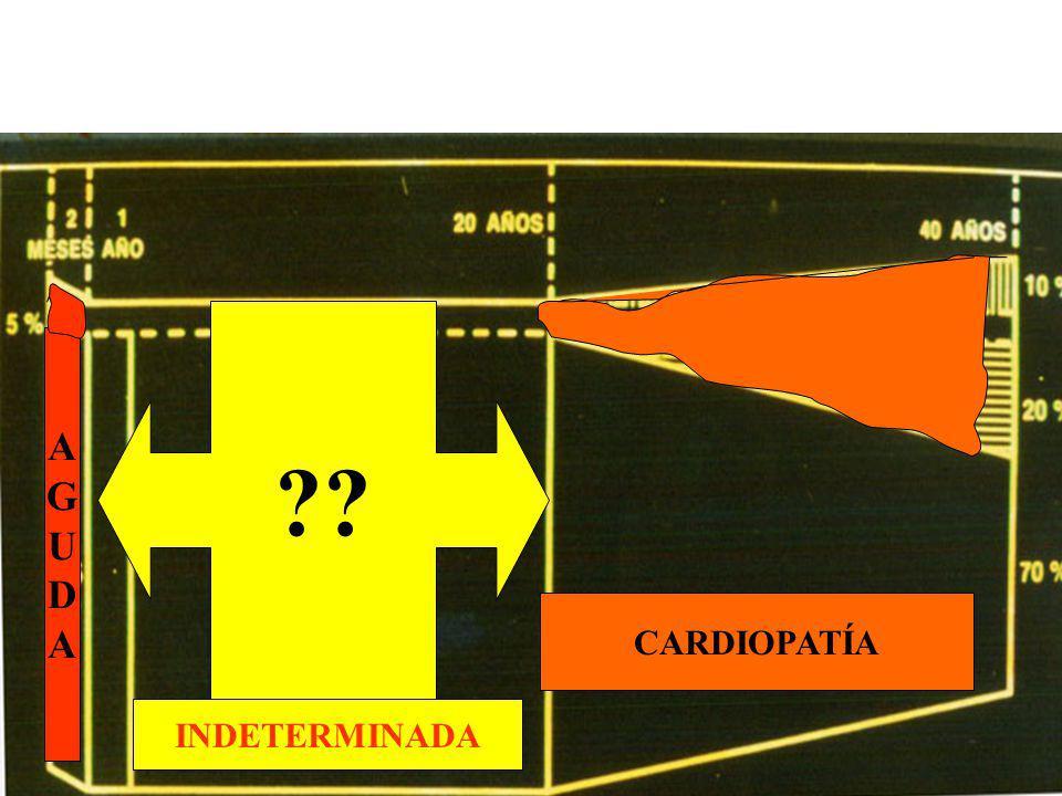 Chagas Indeterminado Antecedentes epidemiológicos Reacciones serológicas positivas Ausencia de síntomas Examen físico normal ECG normal RX torax normal Estudio del aparato digestivo normal Xenodiagnóstico positivo (20 a 40 %)