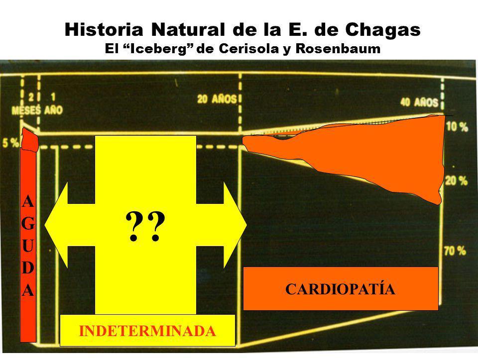 Historia Natural de la E. de Chagas El Iceberg de Cerisola y Rosenbaum INDETERMINADA CARDIOPATÍA AGUDAAGUDA ??