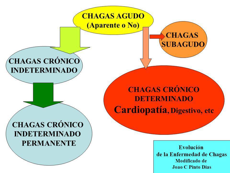 CHAGAS AGUDO (Aparente o No) CHAGAS CRÓNICO INDETERMINADO CHAGAS CRÓNICO INDETERMINADO PERMANENTE CHAGAS CRÓNICO DETERMINADO Cardiopatía, Digestivo, e