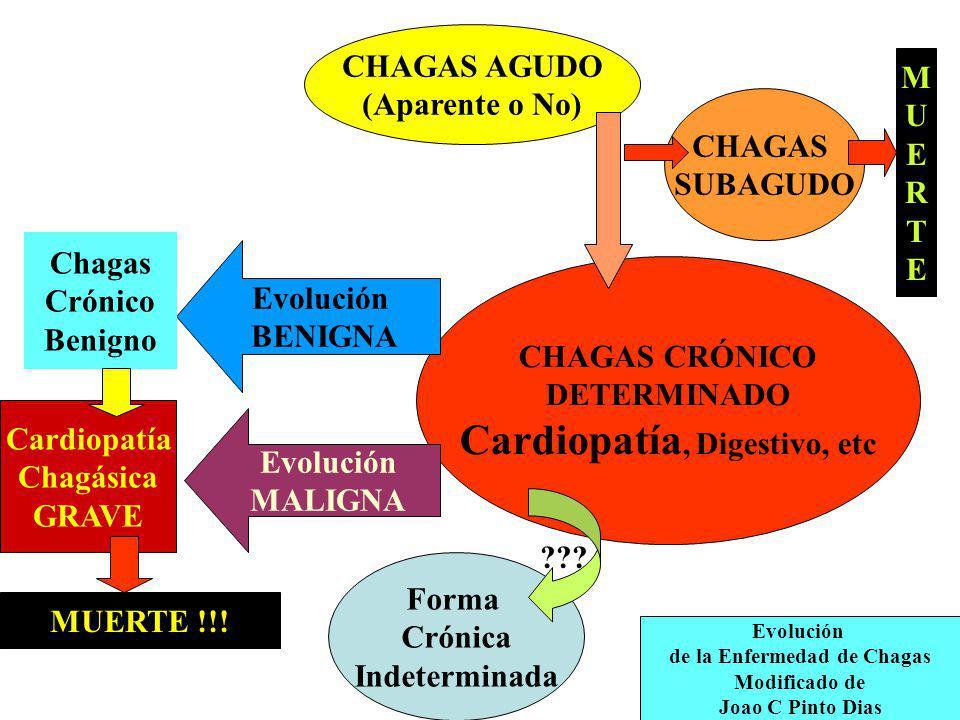 CHAGAS AGUDO (Aparente o No) CHAGAS CRÓNICO DETERMINADO Cardiopatía, Digestivo, etc CHAGAS SUBAGUDO Evolución de la Enfermedad de Chagas Modificado de