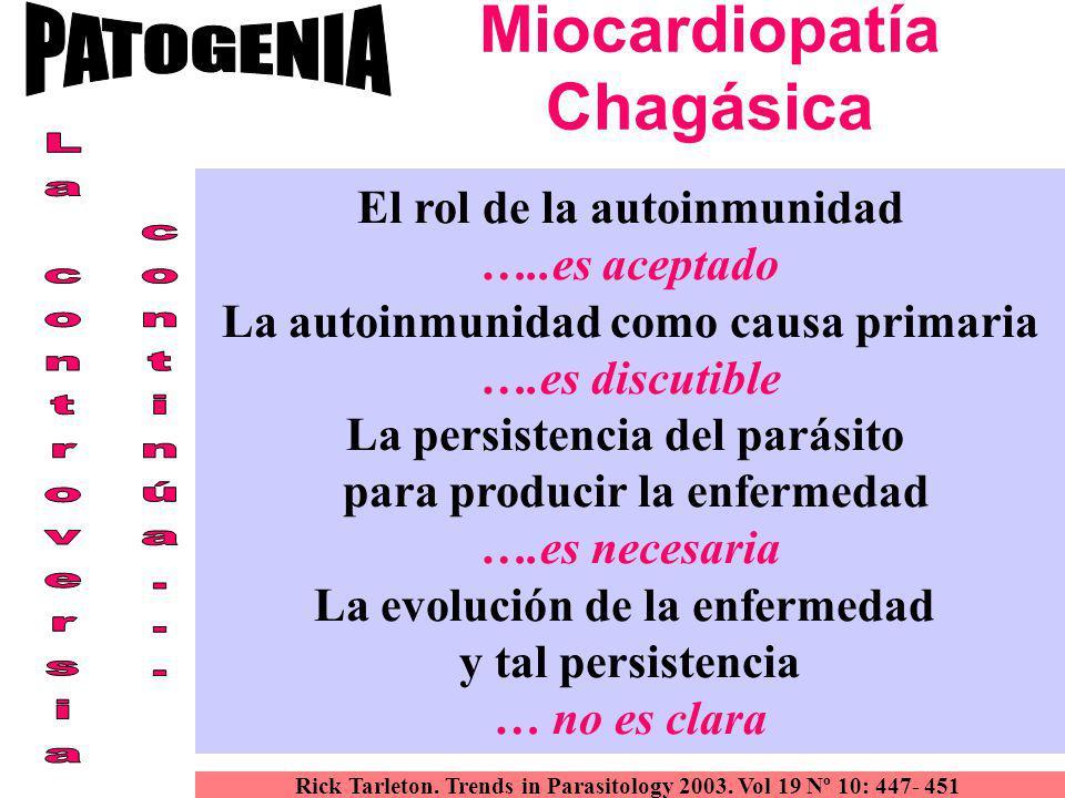 Miocardiopatía Chagásica El rol de la autoinmunidad …..es aceptado La autoinmunidad como causa primaria ….es discutible La persistencia del parásito p