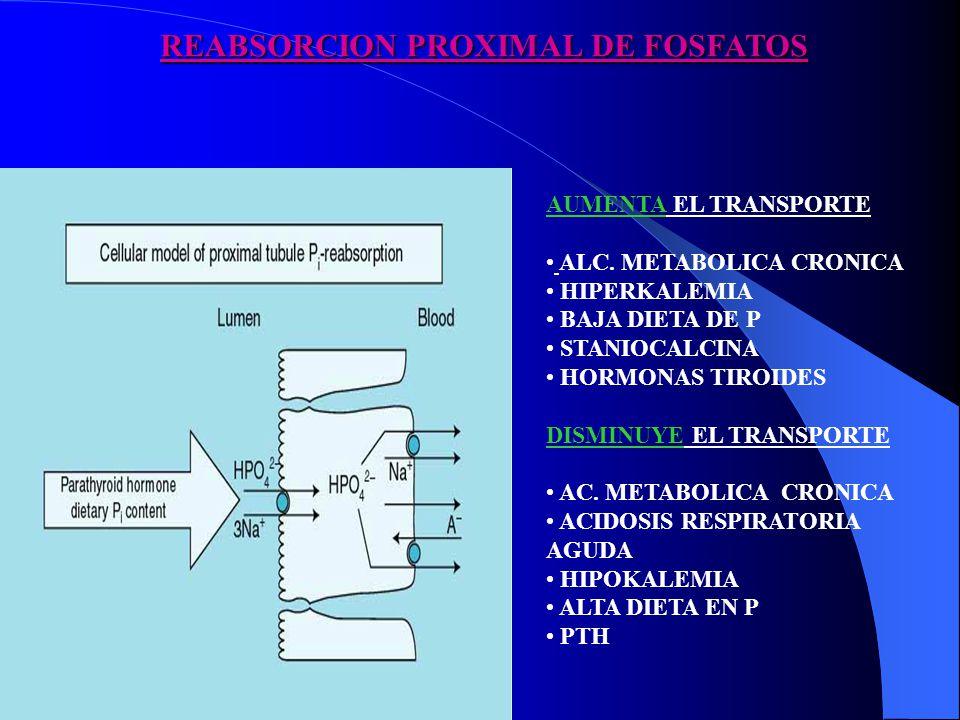 REABSORCION PROXIMAL DE FOSFATOS AUMENTA EL TRANSPORTE ALC. METABOLICA CRONICA HIPERKALEMIA BAJA DIETA DE P STANIOCALCINA HORMONAS TIROIDES DISMINUYE
