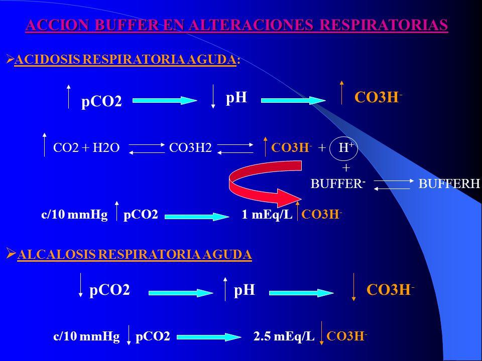ACCION BUFFER EN ALTERACIONES RESPIRATORIAS ACIDOSIS RESPIRATORIA AGUDA: pCO2 pHCO3H - CO2 + H2O CO3H2 CO3H - + H + BUFFER - BUFFERH c/10 mmHg pCO2 1