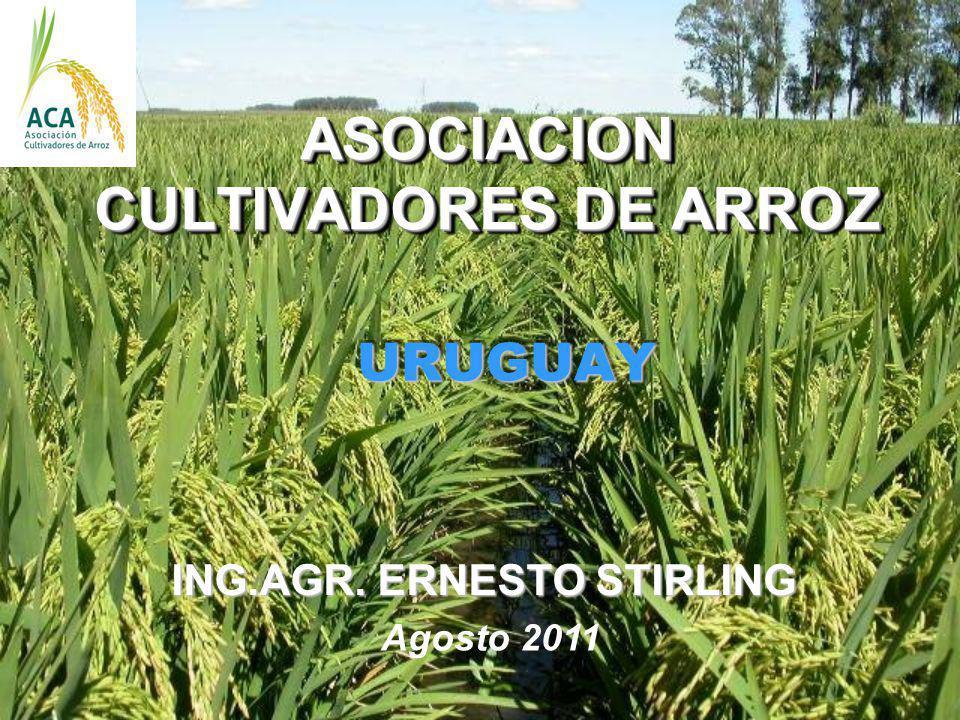 ASOCIACION CULTIVADORES DE ARROZ ASOCIACION CULTIVADORES DE ARROZ URUGUAY URUGUAY ING.AGR. ERNESTO STIRLING Agosto 2011