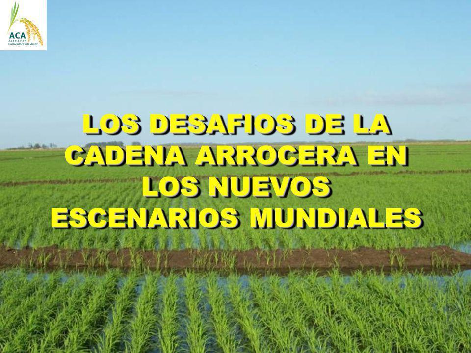 LOS DESAFIOS DE LA CADENA ARROCERA EN LOS NUEVOS ESCENARIOS MUNDIALES