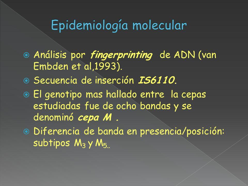 Análisis por fingerprinting de ADN (van Embden et al,1993). Secuencia de inserción IS6110. El genotipo mas hallado entre la cepas estudiadas fue de oc