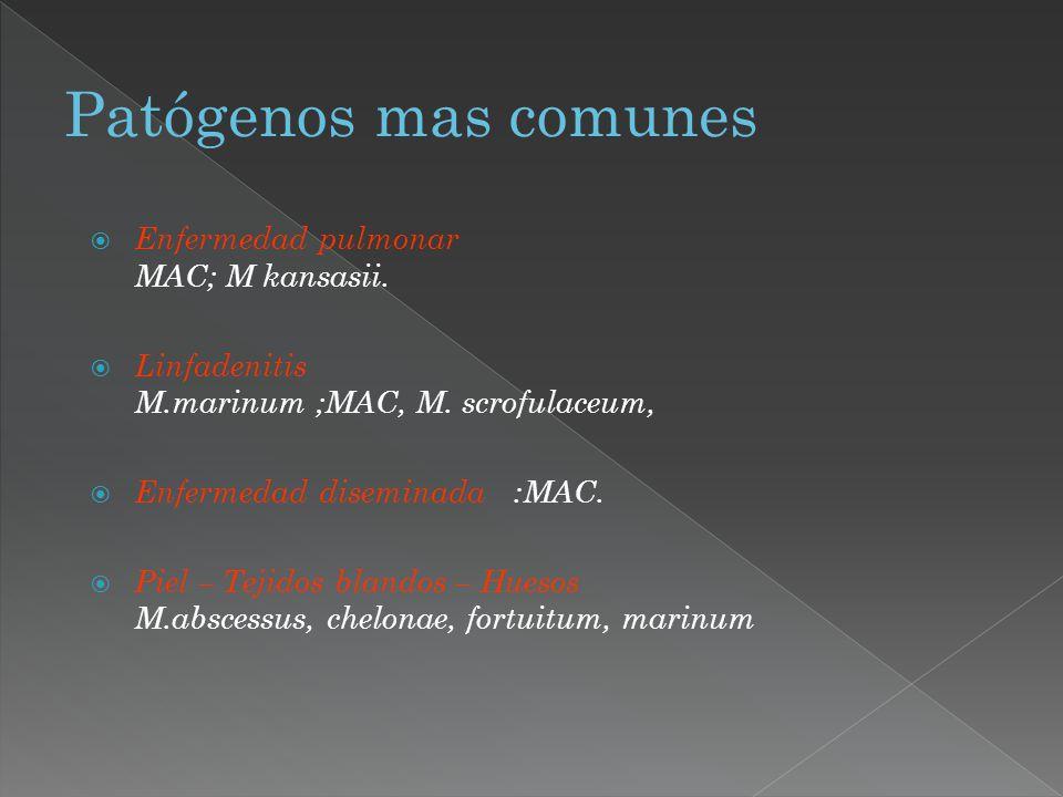 Enfermedad pulmonar MAC; M kansasii. Linfadenitis M.marinum ;MAC, M. scrofulaceum, Enfermedad diseminada :MAC. Piel – Tejidos blandos – Huesos M.absce