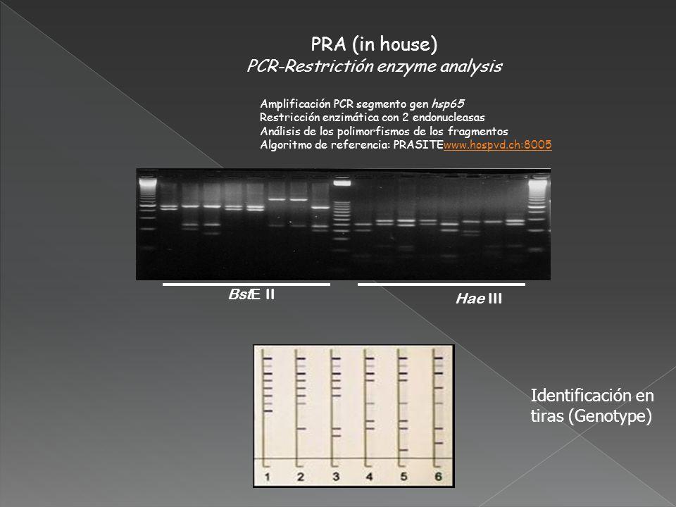 PRA (in house) PCR-Restrictión enzyme analysis Amplificación PCR segmento gen hsp65 Restricción enzimática con 2 endonucleasas Análisis de los polimor