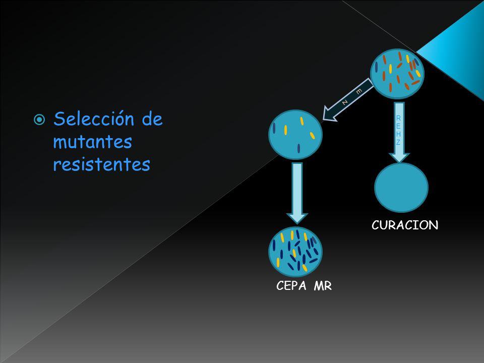 Selección de mutantes resistentes REHZREHZ EzEz CURACION CEPA MR