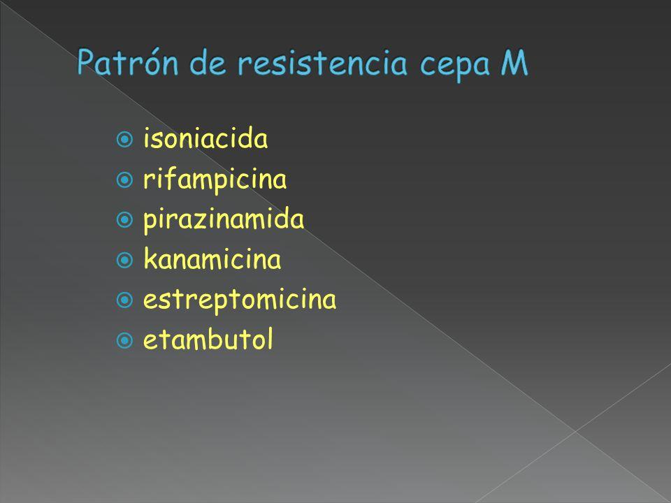 isoniacida rifampicina pirazinamida kanamicina estreptomicina etambutol
