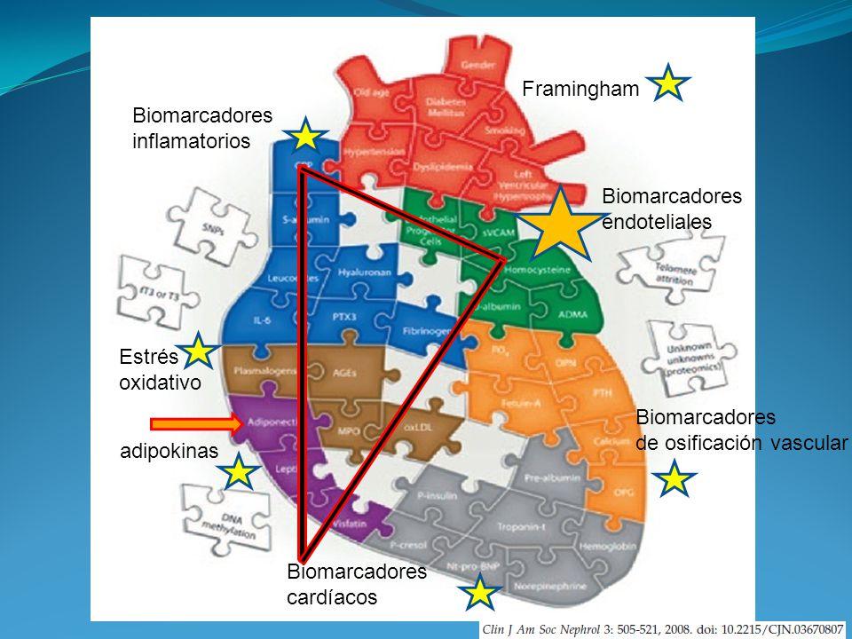 Framingham Biomarcadores inflamatorios Biomarcadores endoteliales Biomarcadores de osificación vascular Estrés oxidativo adipokinas Biomarcadores card