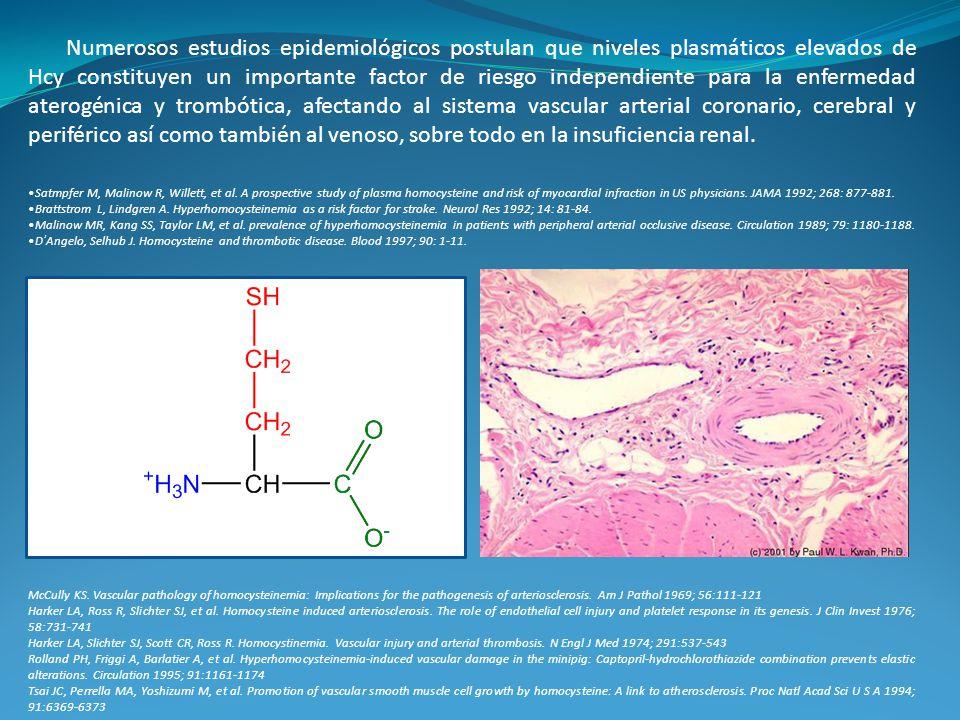 Numerosos estudios epidemiológicos postulan que niveles plasmáticos elevados de Hcy constituyen un importante factor de riesgo independiente para la e