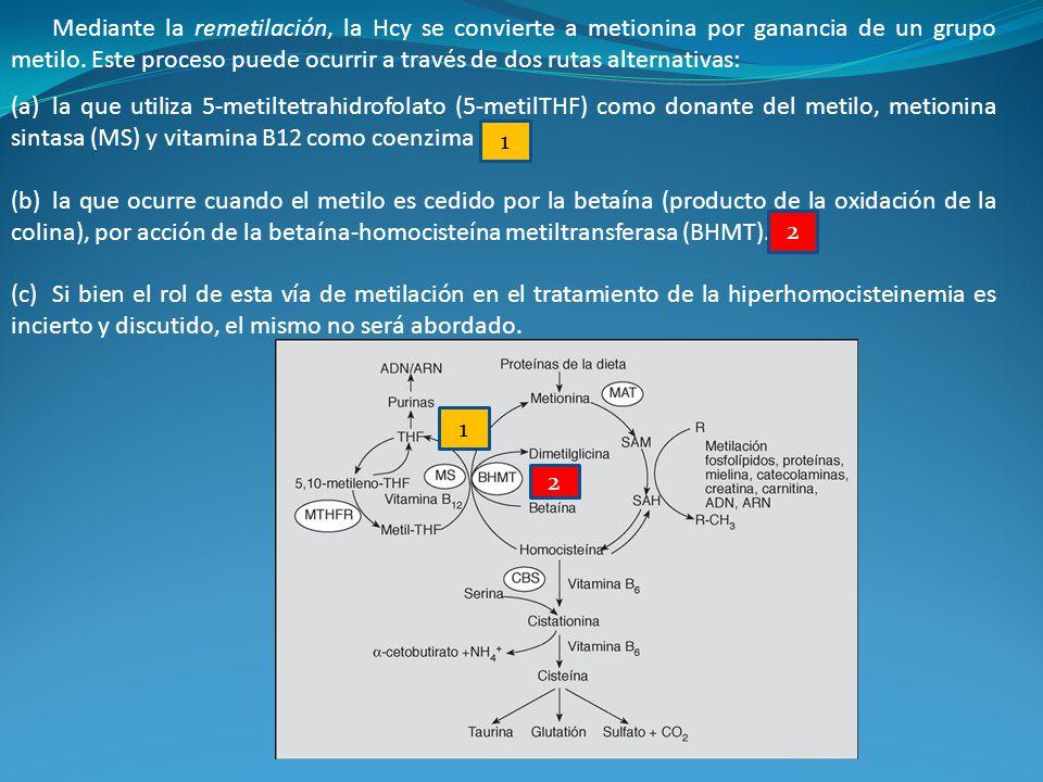 Mediante la remetilación, la Hcy se convierte a metionina por ganancia de un grupo metilo. Este proceso puede ocurrir a través de dos rutas alternativ
