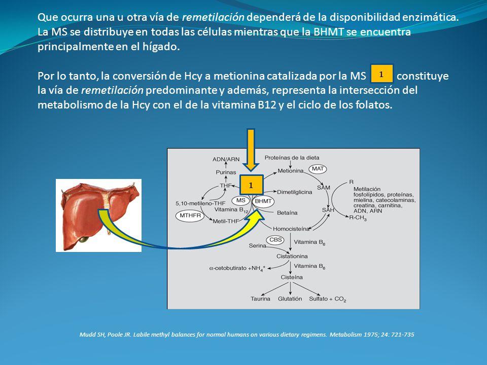 Que ocurra una u otra vía de remetilación dependerá de la disponibilidad enzimática. La MS se distribuye en todas las células mientras que la BHMT se