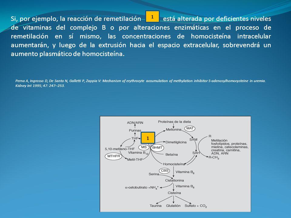 1 Si, por ejemplo, la reacción de remetilación está alterada por deficientes niveles de vitaminas del complejo B o por alteraciones enzimáticas en el