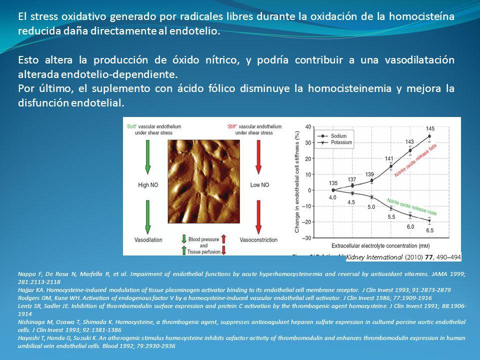 El stress oxidativo generado por radicales libres durante la oxidación de la homocisteína reducida daña directamente al endotelio. Esto altera la prod