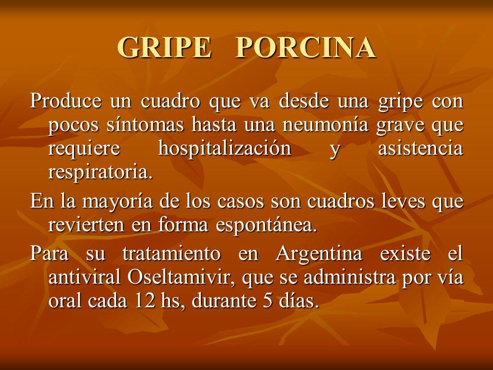 GRIPE PORCINA Produce un cuadro que va desde una gripe con pocos síntomas hasta una neumonía grave que requiere hospitalización y asistencia respiratoria.