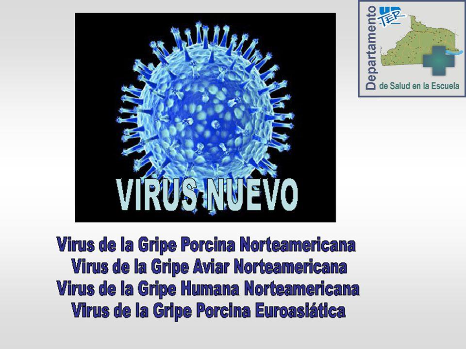 Virus INFLUENZA A H1 N1 Un virus es una estructura subcelular, formada principalmente por: ácidos nucleicos y proteínas.