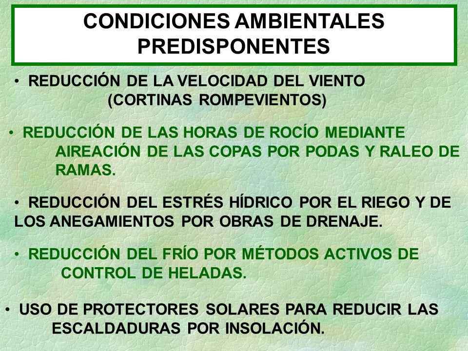 CONDICIONES AMBIENTALES PREDISPONENTES REDUCCIÓN DE LA VELOCIDAD DEL VIENTO (CORTINAS ROMPEVIENTOS) REDUCCIÓN DE LAS HORAS DE ROCÍO MEDIANTE AIREACIÓN