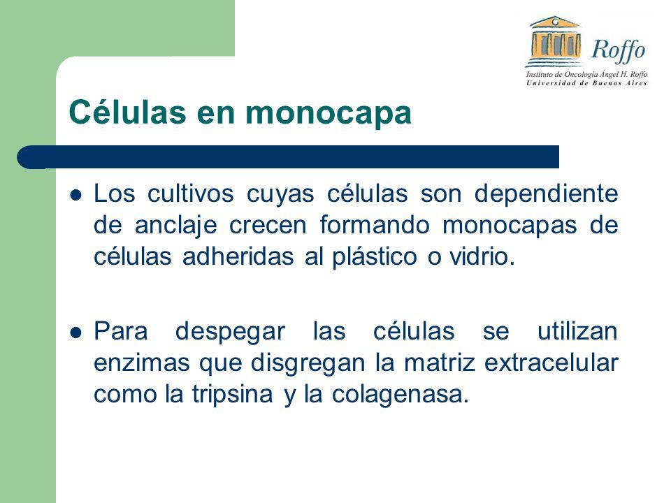 Células en monocapa Los cultivos cuyas células son dependiente de anclaje crecen formando monocapas de células adheridas al plástico o vidrio. Para de