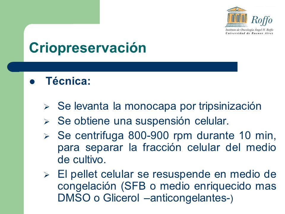 Criopreservación Técnica: Se levanta la monocapa por tripsinización Se obtiene una suspensión celular. Se centrifuga 800-900 rpm durante 10 min, para
