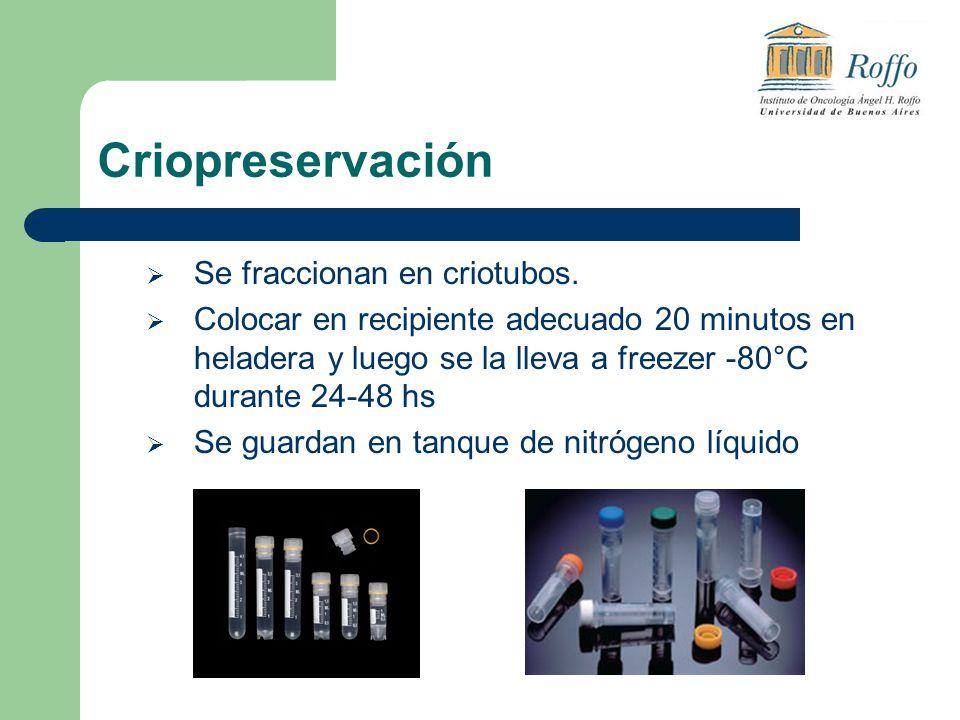Criopreservación Se fraccionan en criotubos. Colocar en recipiente adecuado 20 minutos en heladera y luego se la lleva a freezer -80°C durante 24-48 h