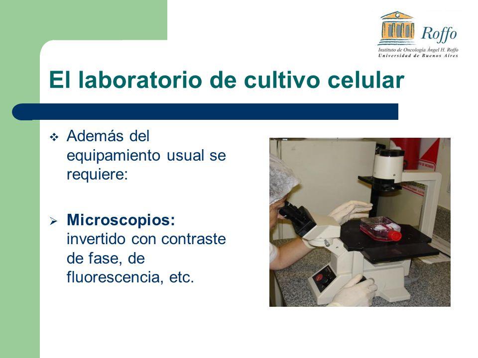 El laboratorio de cultivo celular Además del equipamiento usual se requiere: Microscopios: invertido con contraste de fase, de fluorescencia, etc.
