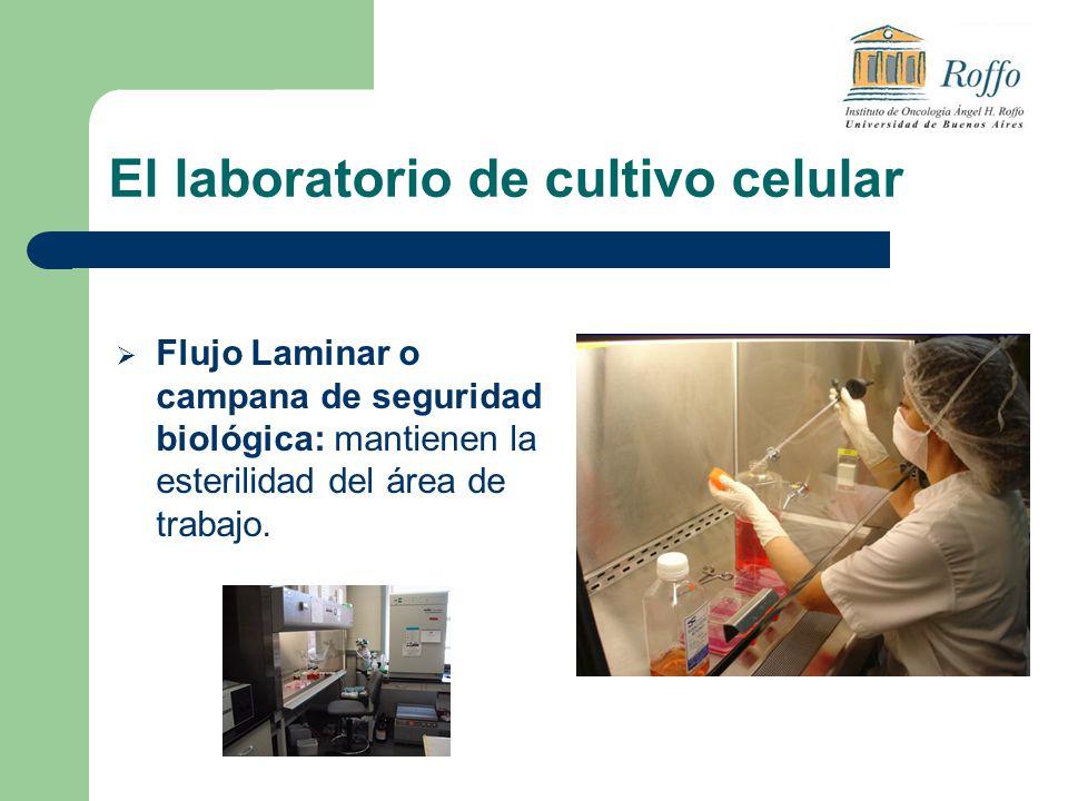 El laboratorio de cultivo celular Flujo Laminar o campana de seguridad biológica: mantienen la esterilidad del área de trabajo.