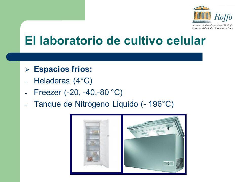 El laboratorio de cultivo celular Espacios fríos: - Heladeras (4°C) - Freezer (-20, -40,-80 °C) - Tanque de Nitrógeno Liquido (- 196°C)