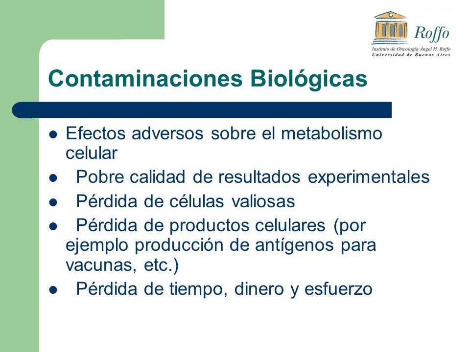 Contaminaciones Biológicas Efectos adversos sobre el metabolismo celular Pobre calidad de resultados experimentales Pérdida de células valiosas Pérdida de productos celulares (por ejemplo producción de antígenos para vacunas, etc.) Pérdida de tiempo, dinero y esfuerzo