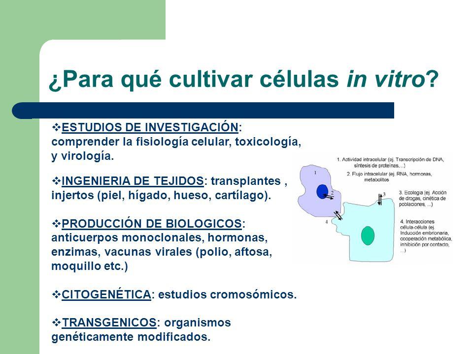 ¿Para qué cultivar células in vitro? ESTUDIOS DE INVESTIGACIÓN: comprender la fisiología celular, toxicología, y virología. INGENIERIA DE TEJIDOS: tra