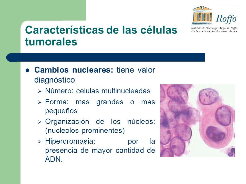 Características de las células tumorales Cambios nucleares: tiene valor diagnóstico Número: celulas multinucleadas Forma: mas grandes o mas pequeños Organización de los núcleos: (nucleolos prominentes) Hipercromasia: por la presencia de mayor cantidad de ADN.