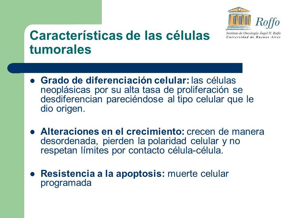 Características de las células tumorales Grado de diferenciación celular: las células neoplásicas por su alta tasa de proliferación se desdiferencian pareciéndose al tipo celular que le dio origen.