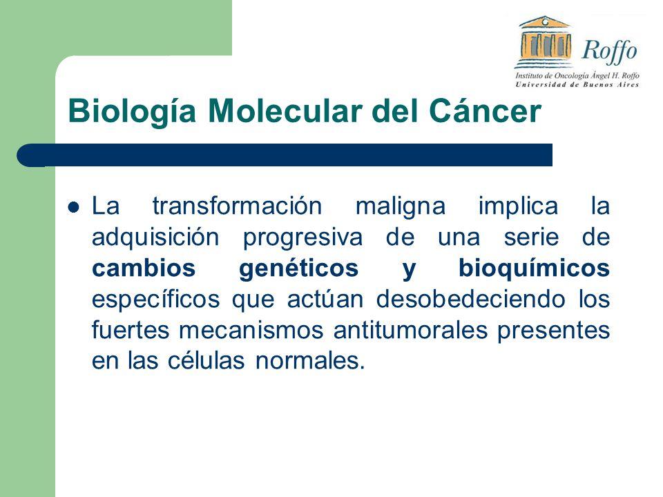 Biología Molecular del Cáncer La transformación maligna implica la adquisición progresiva de una serie de cambios genéticos y bioquímicos específicos