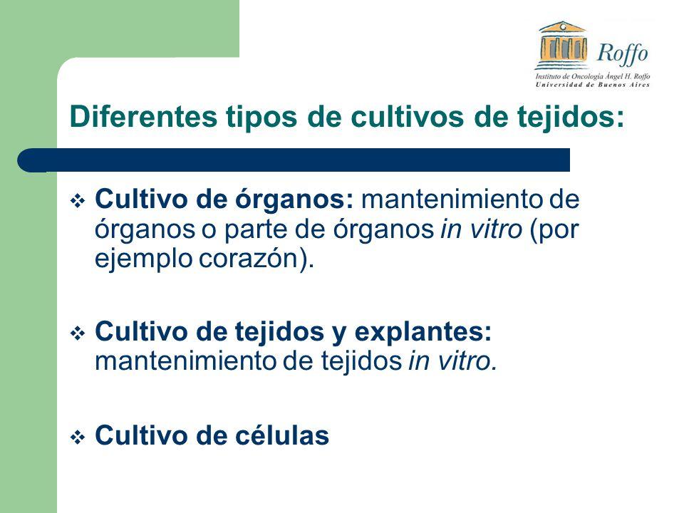 Diferentes tipos de cultivos de tejidos: Cultivo de órganos: mantenimiento de órganos o parte de órganos in vitro (por ejemplo corazón). Cultivo de te