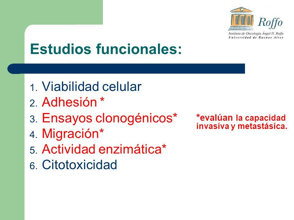 Estudios funcionales: 1. Viabilidad celular 2. Adhesión * 3. Ensayos clonogénicos* 4. Migración* 5. Actividad enzimática* 6. Citotoxicidad * evalúan l