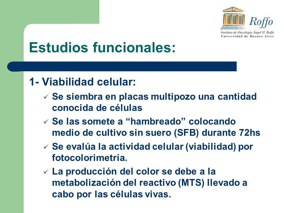Estudios funcionales: 1- Viabilidad celular: Se siembra en placas multipozo una cantidad conocida de células Se las somete a hambreado colocando medio