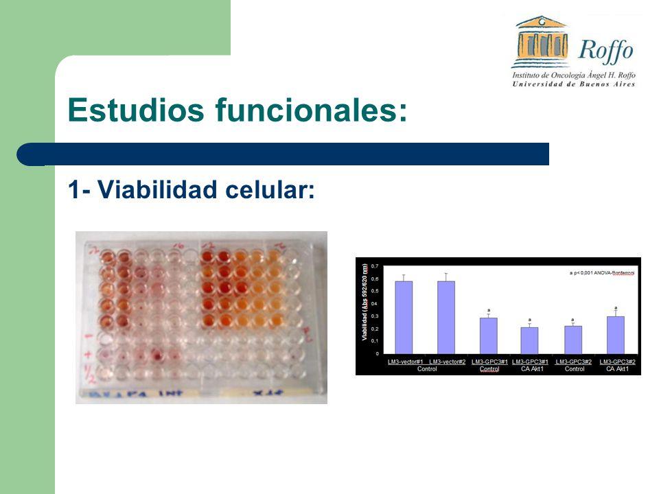 Estudios funcionales: 1- Viabilidad celular: