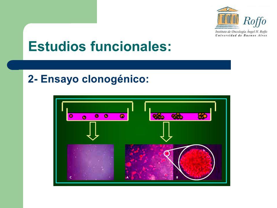 Estudios funcionales: 2- Ensayo clonogénico: