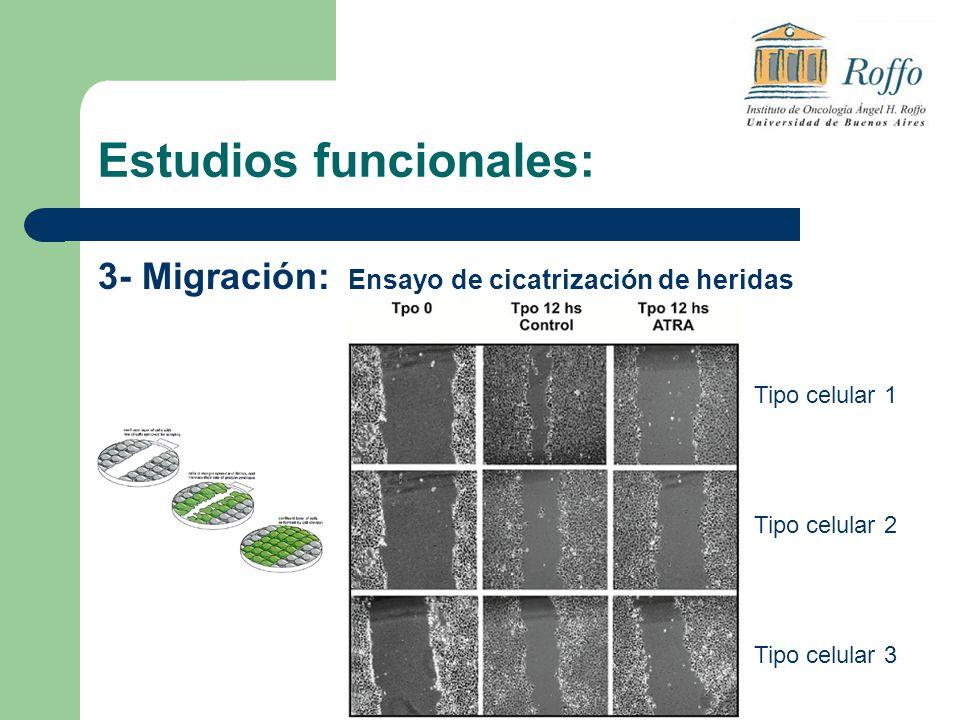 Estudios funcionales: 3- Migración: Ensayo de cicatrización de heridas Tipo celular 1 Tipo celular 2 Tipo celular 3