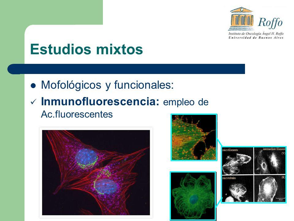 Estudios mixtos Mofológicos y funcionales: Inmunofluorescencia: empleo de Ac.fluorescentes
